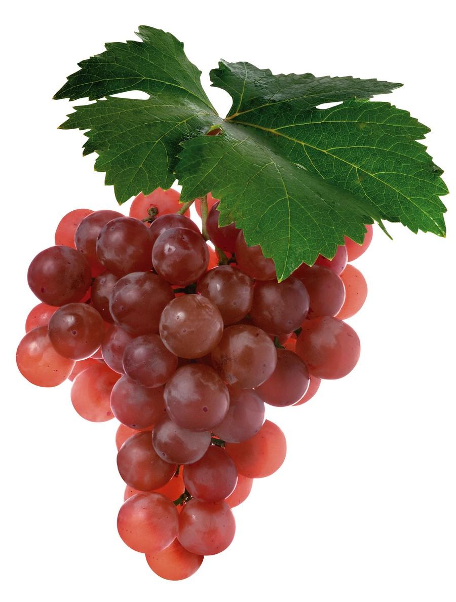 Экстракт виноградной выжимки (порошок мелкозернистого винограда) Виноград